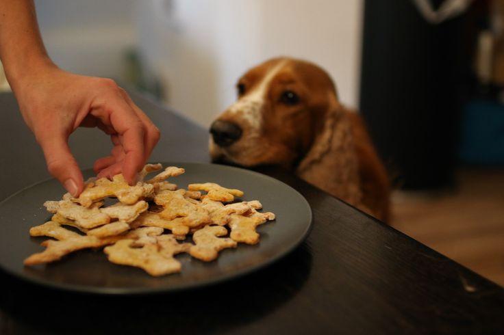 (Fotos Lisa Hemmer Fotografie ) Die Vorteile von selbstgemachten Hundekeksen liegen auf der Hand: ihr wisst genau was drin ist (keine minderwertigen Fleischnebenprodukte wie Schnäbel, Federn und co…