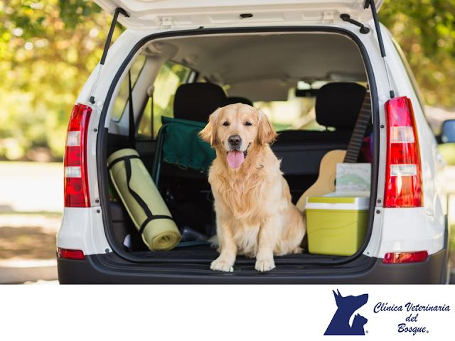 LA MEJOR CLÍNICA VETERINARIA DE MÉXICO. La vida puede ser muy complicada si no acostumbras a tu perro a viajar en coche. Primero, debes acostúmbrale a realizar pequeños trayectos de 5 a 10 minutos en días alternos, y poco a poco aumentar la duración de los viajes hasta que se sienta cómodo. Existen cinturones y asientos de seguridad para mascotas. En Clínica Veterinaria del Bosque, te invitamos a comunicarte con nosotros a los teléfonos 5360-3311 y 5240-0404 para resolver tus dudas…