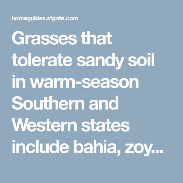 Grasses that tolerate sandy soil in warm-season Southern and Western states include bahia, zoysia, Bermuda and centipede varieties. Growing most actively during the summer, they become dormant in cooler weather and may lose color until warm weather returns. Bahia (Paspalum notatum) produces a coarse turf, and requires regular mowing from May through November to control its prolific seed heads. Sand-tolerant zoysia grass is known for turning brown at the first frost, but revives to form a…