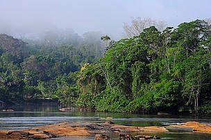 Regnskog ved elven Oiapoque i Brasil - © WWF Brasil    Denne uken skal skjebnen til Brasils skoger avgjøres. Brasils egen president Dilma Rousseff har til fredag på å bestemme seg for om hun skal stanse den kontroversielle skogloven som ble vedtatt i kongressen 25. april. Gjør hun ikke det kan over 75 millioner hektar skog gjøres lovlig for hogst, og store deler av Brasil og Amazonas skoger kan være tapt for alltid.    Les mer: http://www.wwf.no/bibliotek/nyheter_fakta/?36265#