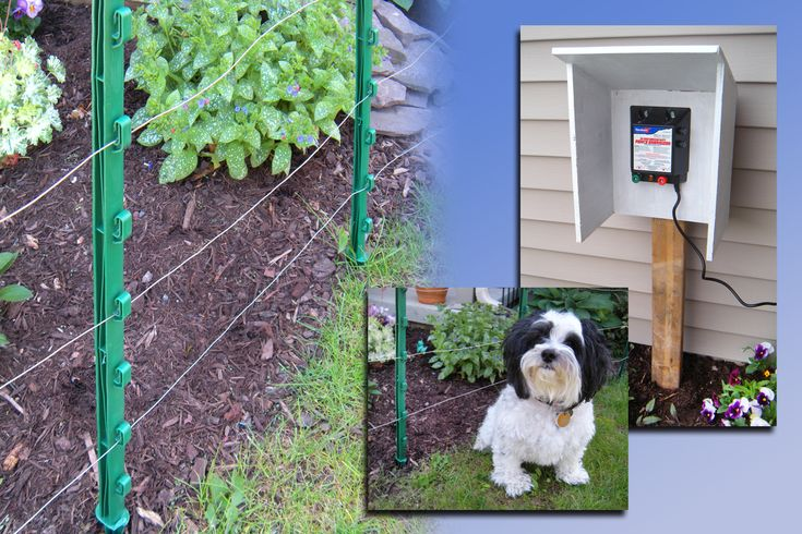 Dog Fence Electric, Above Ground Wireless Fence For Dogs