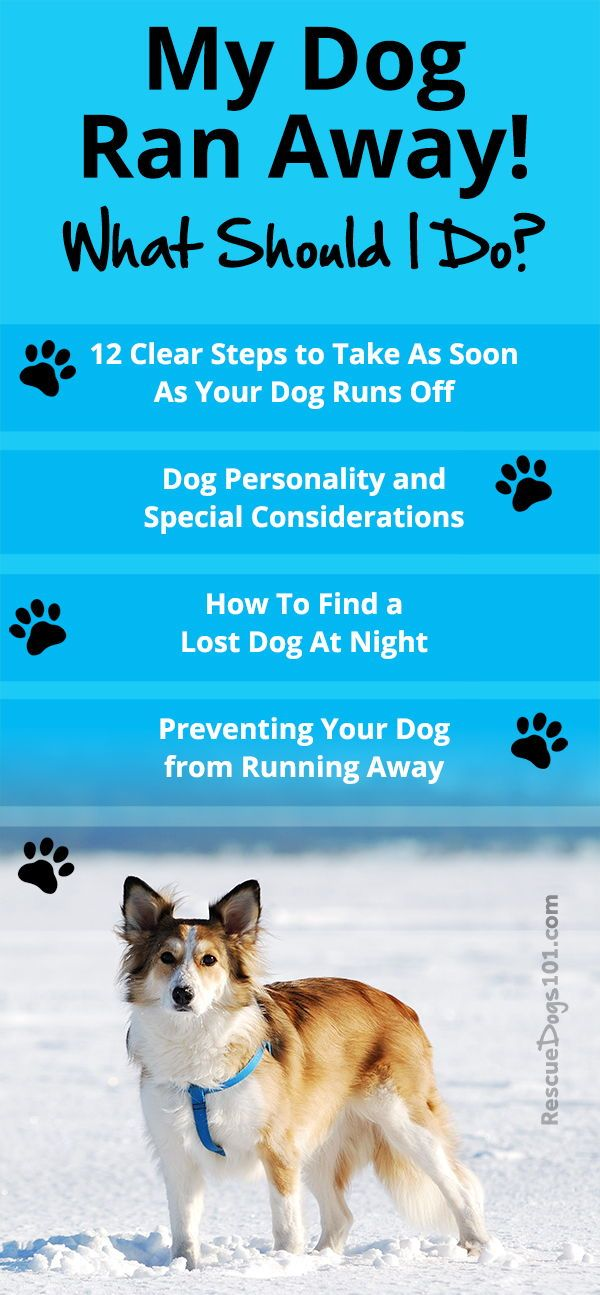My Dog Ran Away What Should I Do Losing A Dog Dogs Kids Dog