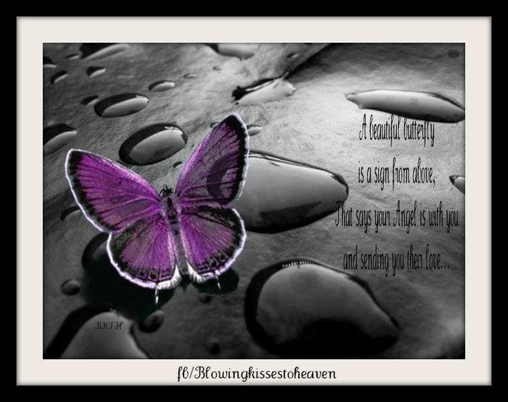 butterfly heaven wallpaper - photo #7
