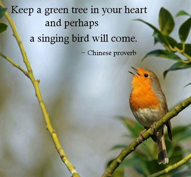 Pin By Larysa Adamovich On Ancient Proverbs Singing Quotes Bird Quotes Chinese Proverbs