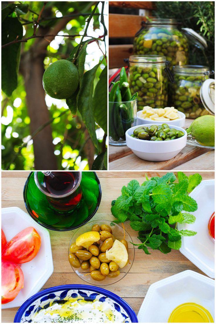Cured Olives 6