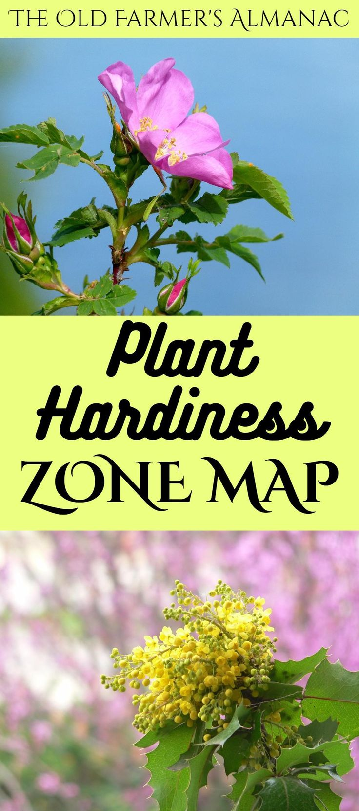 246 Best Images About Garden Planning On Pinterest