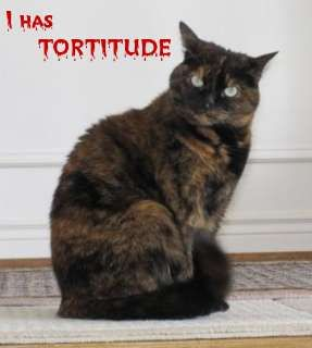 """Never heard of Tortitude??  Tortoiseshell cats share a unique personality most often described as """"tortitude."""" Torties are almost always very active and playful, with sassy, spunky, in-your-face attitudes. They also often fancy themselves as alpha cats, which can sometimes create problems.  Tortoiseshells are feistier and louder, and most definitely """"PRINCESSES"""" and act like it."""