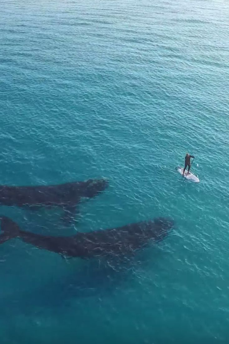 Rare Whale Duo Gets Friendly With Lucky Paddleboarder