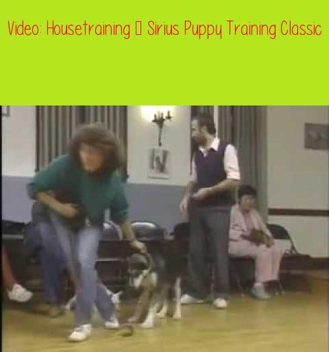 Housetraining Sirius Puppy Training Classicif You Catch Your Pup