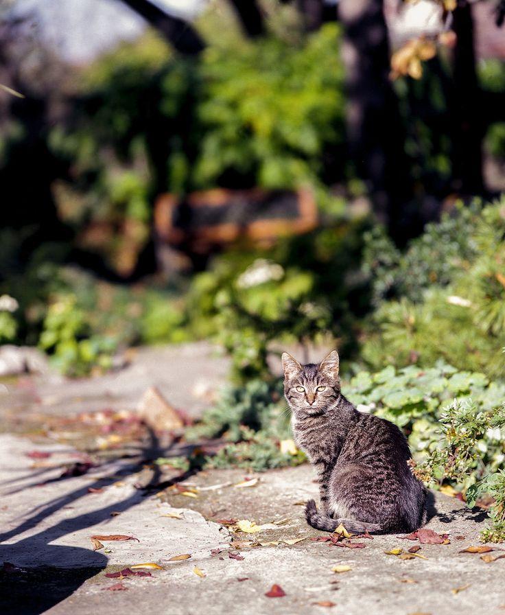 don't lose eye contact Mamiya RB67 Pro S Mamiya Sekor C 180mm f/4.5  Fuji Superia 100 expired in 2005 shot at 50 6x7 film fuji superia 120 mediumformat mamiya rb67 sekorc 180mm 45 handheld cat shadow bokeh bokehlicious