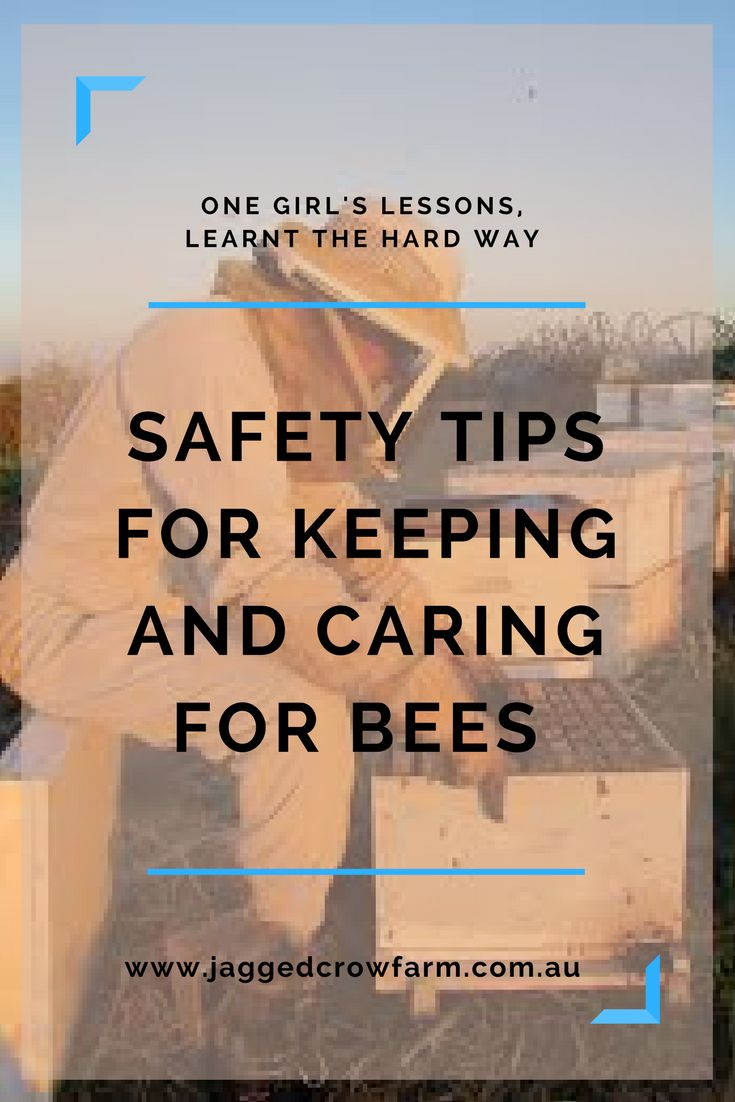 Safety Tips | Beekeeping | Honey | Bees
