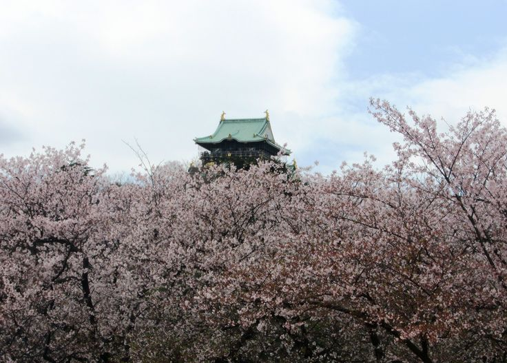 Kelsey Moore: This photo exhibits the gorgeous natural beauty of the cherry blossoms that bloom for a short period in Spring, as well as the unique, historical architecture of Osaka Castle.
