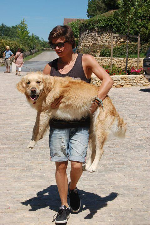 The Vamps   The Vamps (5)brad loving his dog