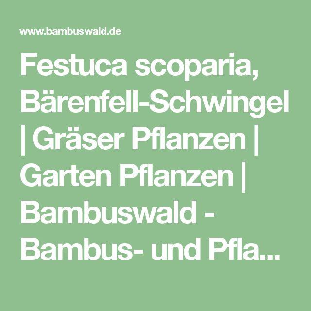 Festuca scoparia, Bärenfell-Schwingel   Gräser Pflanzen   Garten Pflanzen   Bambuswald - Bambus- und Pflanzenshop für Haus und Garten