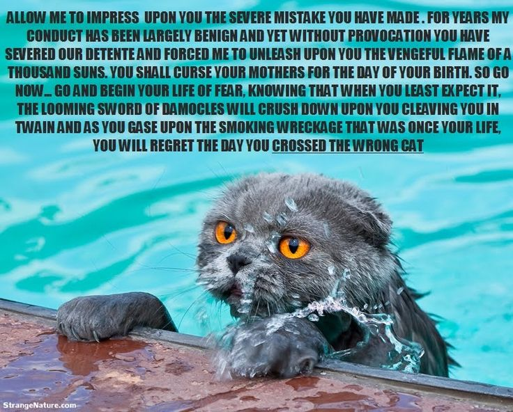 funny swimming quotes sweet