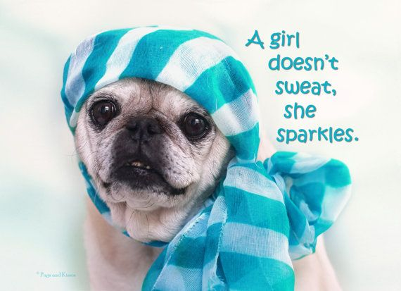 What do you think girls? This is true, right?!?  A Girl Doesn't Sweat 5x7 Adorable Pug Birthday Card by Pugs and Kisses