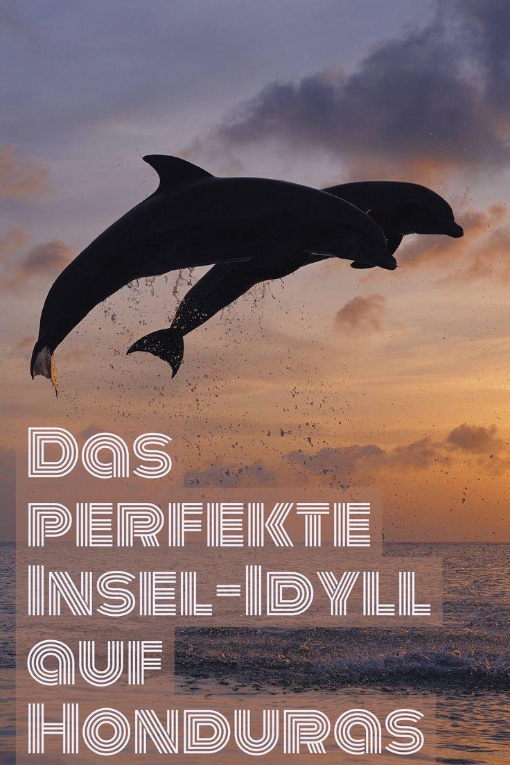 Vor Honduras' Küste haben wir das perfekte Insel-Idyll entdeckt: Delfine zischen durchs Meer, die Strände sind ein Traum, die Einheimischen entspannt.
