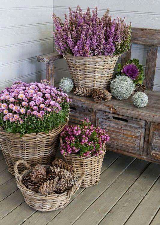Planter inside of a Goodwill basket for Front Porch - No worries about the basket getting damaged by the elements.