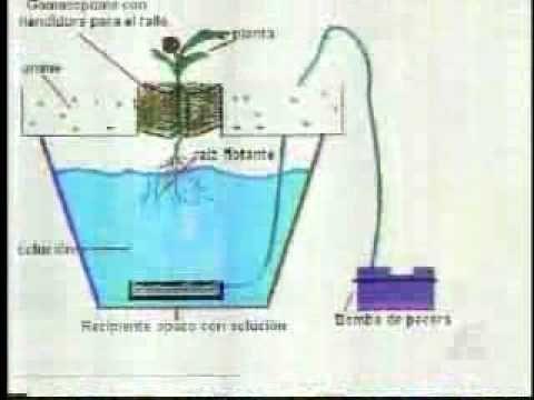 Como sembrar lechugas en hidroponia