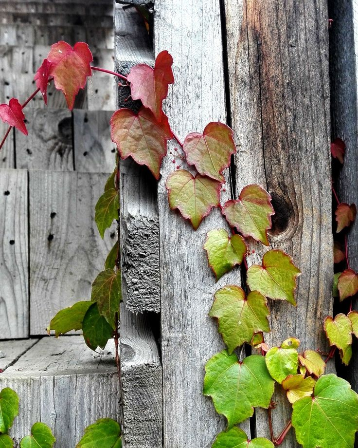 Amazing detail of pallet wood and autumn leaves ❤ nature is the greatest artist 😊