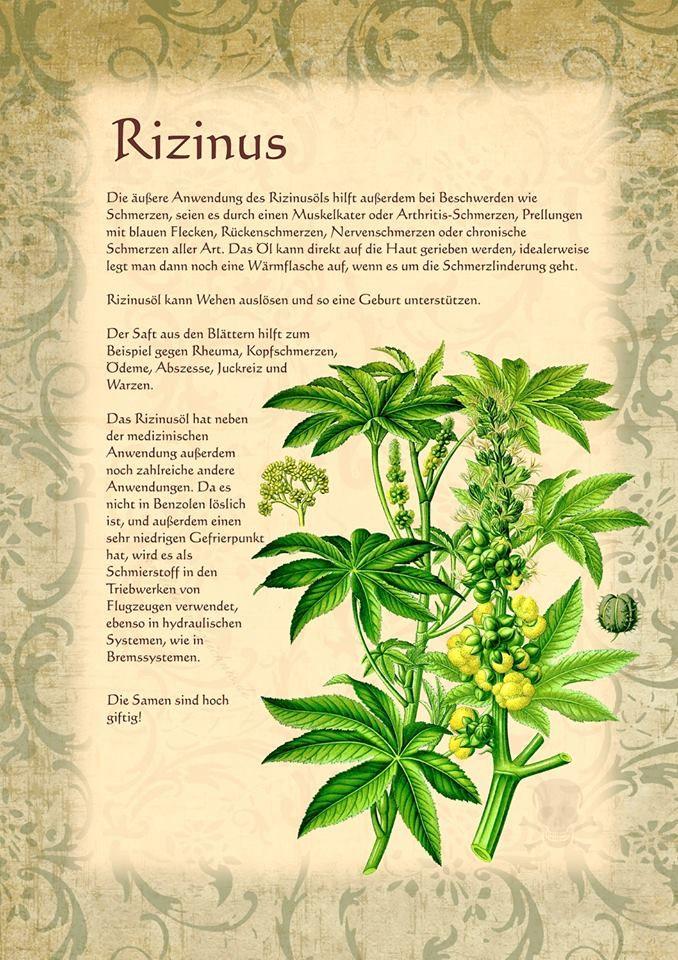 Rizinus http://www.kraeuter-verzeichnis.de/