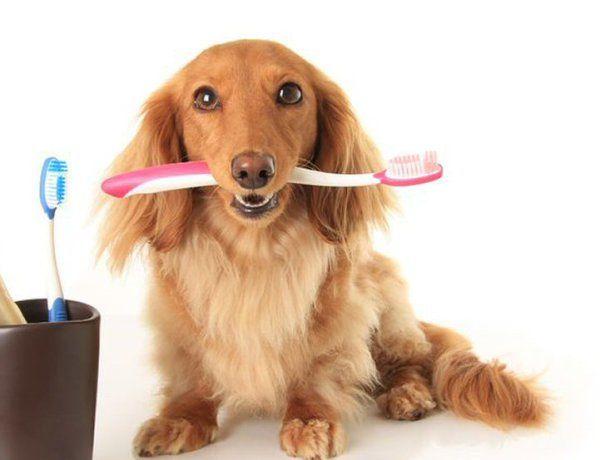 Köpeklerde Diş Sağlığı ve Bakımı http://www.ajanimo.com/kopeklerde-dis-sagligi-ve-bakimi/