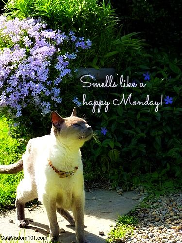 Image result for happy monday cats