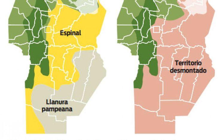 Reforestar Córdoba: un debate que el diluvio reactualiza