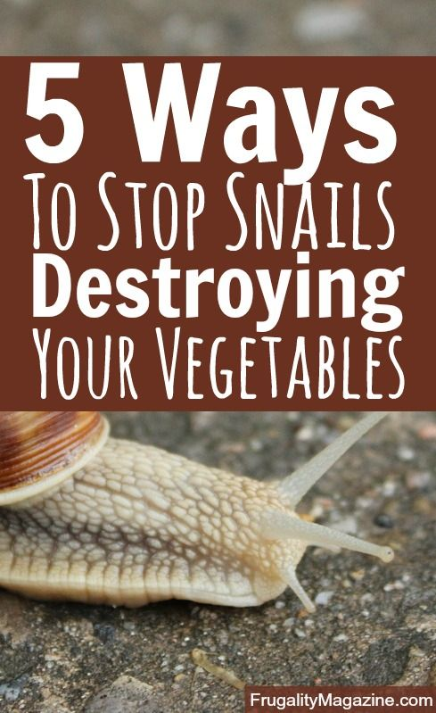 Do you grow your own vegetables? Are you sick of snails eating your crops? If so, here are some proven pest control tips. #gardening #selfsufficiency