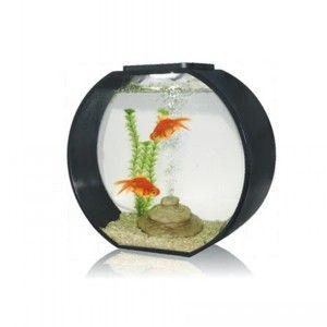 Glass Aquarium 20L Black #fishtank