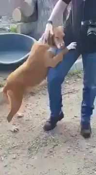 Journalist  masking  story at Canine Shelter, adopts Canine who grabbed him and simply would not let go.