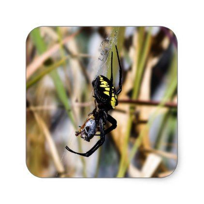 Black & Yellow Argiope Garden Spider Sticker - black gifts unique cool diy customize personalize