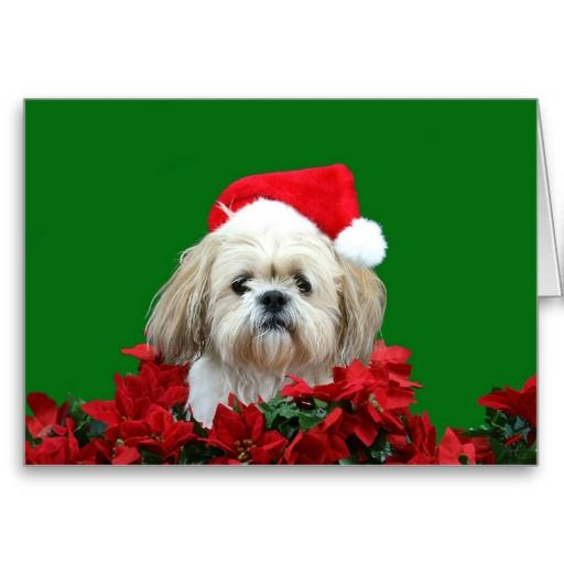 Cute Shih Tzu with a Santa hat dog Christmas cards