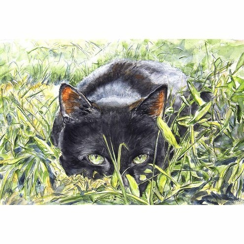Black Cat Watercolour Signed  A4 Print (11.75 x 8.25 inches) Watching £18.00