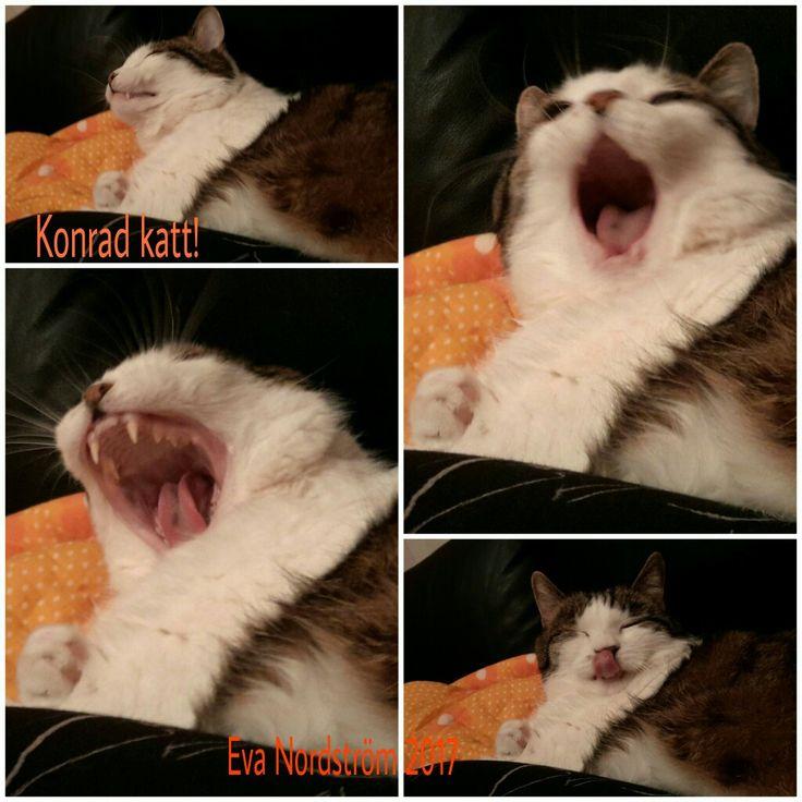 Konrad the cat!