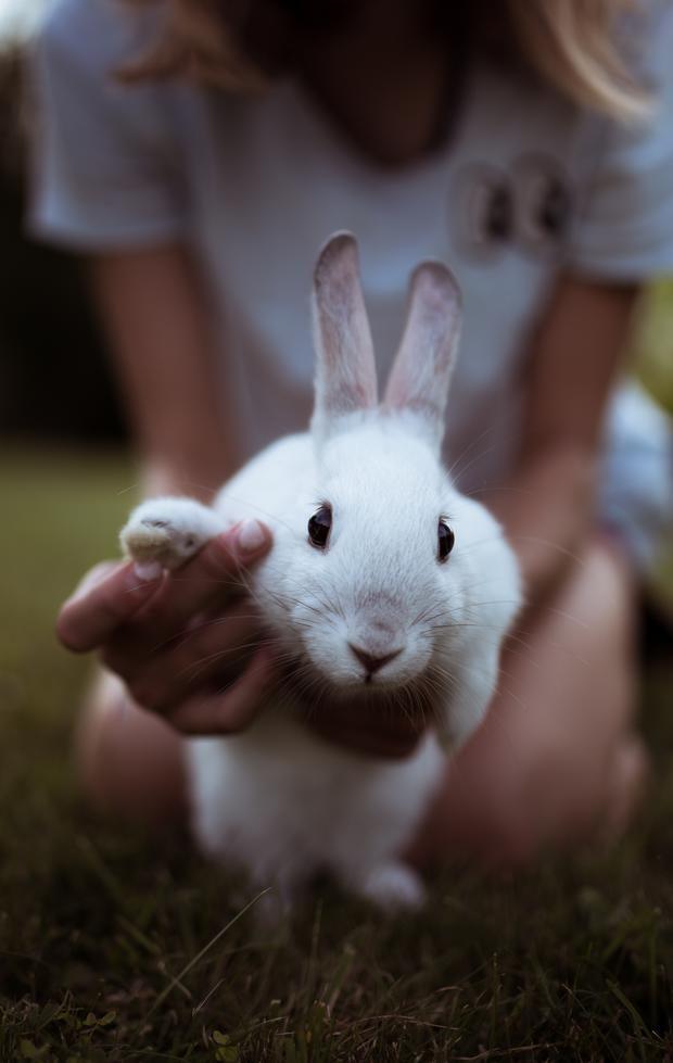 Ein Hase Als Ostergeschenk Was Du Unbedingt Vorher Wissen Solltest Kinder Tiere Ausgestopftes Tier Susser Hase