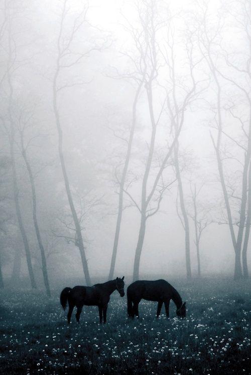 Enesmble dans la brume...