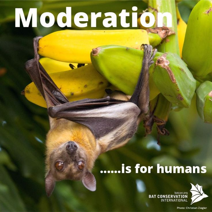 Bat Conservation International     Congratulations Laura Williams, your #SillySaturday caption was our favorite!!!