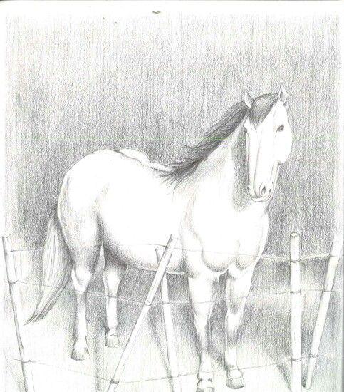 Horse-b&g