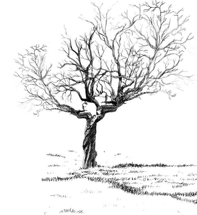 12345 arbres drawings illustration et design crafts. Black Bedroom Furniture Sets. Home Design Ideas