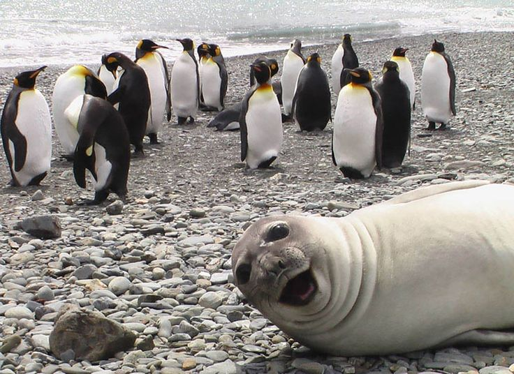 The most hilarious animal photobombers of all time