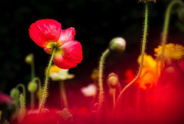closeup of beautiful blooming flowers