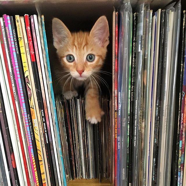[Fue sólo cuestión de tiempo antes de que terminara en la pila de discos... ] » It was only a matter of time before he ended up in the record stacks...