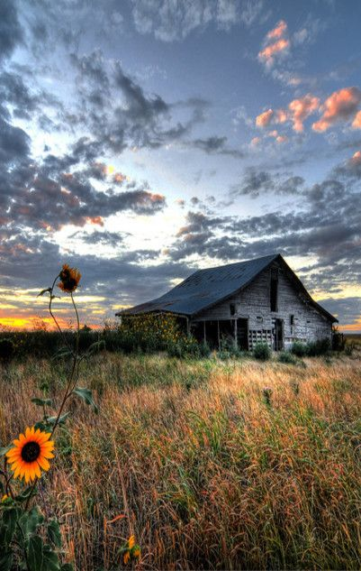 Barn, sunflowers, and that sky