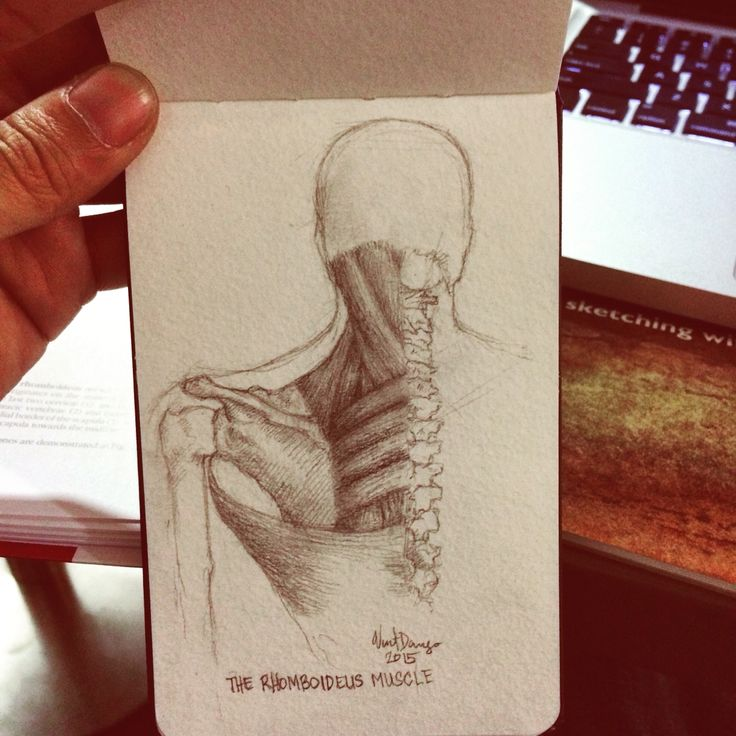 Anatomy drawing sketch study. The Rhomboideus muscle. Graphite drawing on moleskine by Vincent Joe Dango.