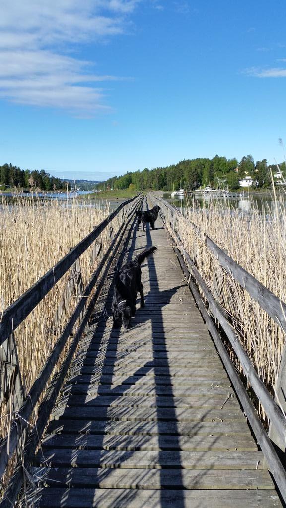 Sammy and Mika at Brønnøya, Norway :)