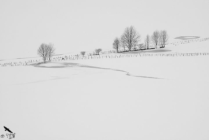 A portrait of Asiago plateau by Vittorio Poli