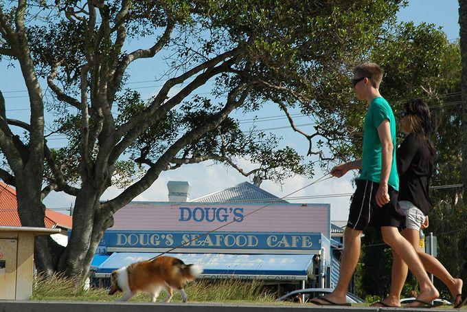 10 Great Dog Walks Around Brisbane | Must do Brisbane