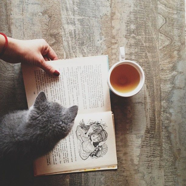 A good book, a cup of tea, and someone to turn the pages for you - a cat's life