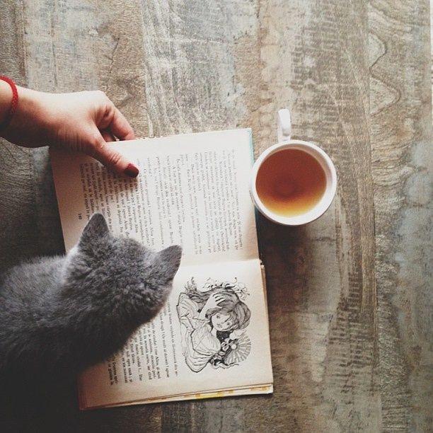 Book kitty